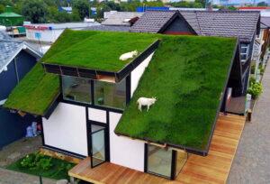 Эксплуатируемые зеленые крыши